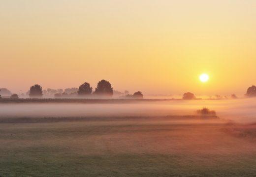 Dawn Chorus by Mike Challis